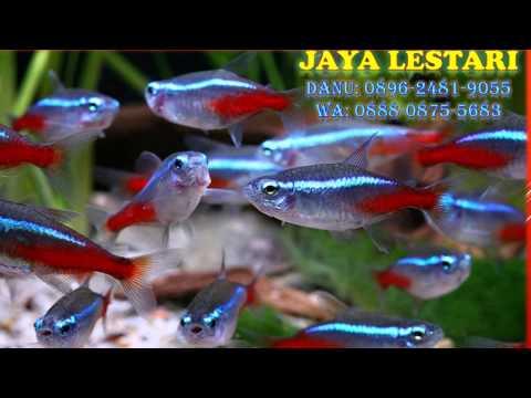 0896-2481-9055-(tri),-aquarium-mini-pondok-gede,-beli-aquarium-mini-pondok-gede,