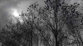 Скачать Arsonist S Lullaby Hozier Unofficial Music Video