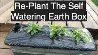 Planting An Earth Box Self Watering Container For Cheap In The Alberta Urban Garden