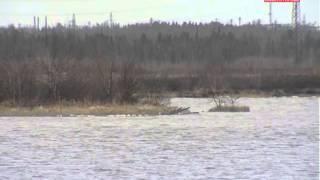 Сезон охоты на Ямале открыт(Новости нашего города Ноябрьск, группа компаний