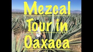 A Real-Deal Mezcal Tour: From Agave Harvest to Heroic Sampling