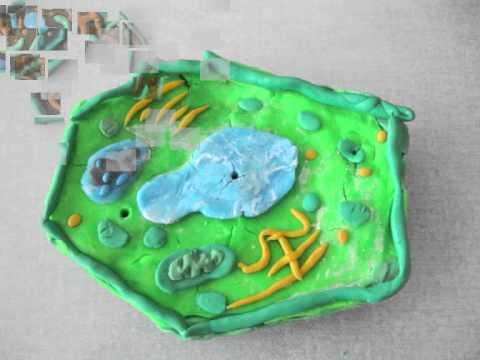 Modelli di cellula vegetale e animale youtube - Modelli di colorazione per bambini ...