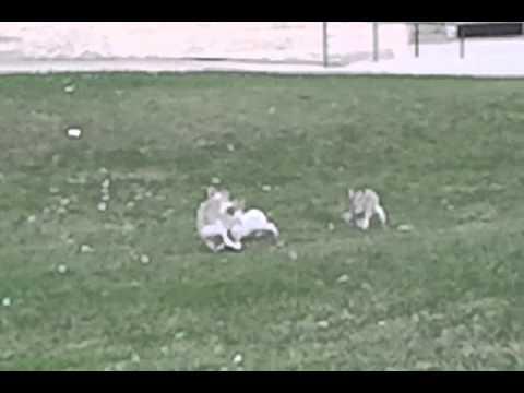 rabbits outside grant mcewen