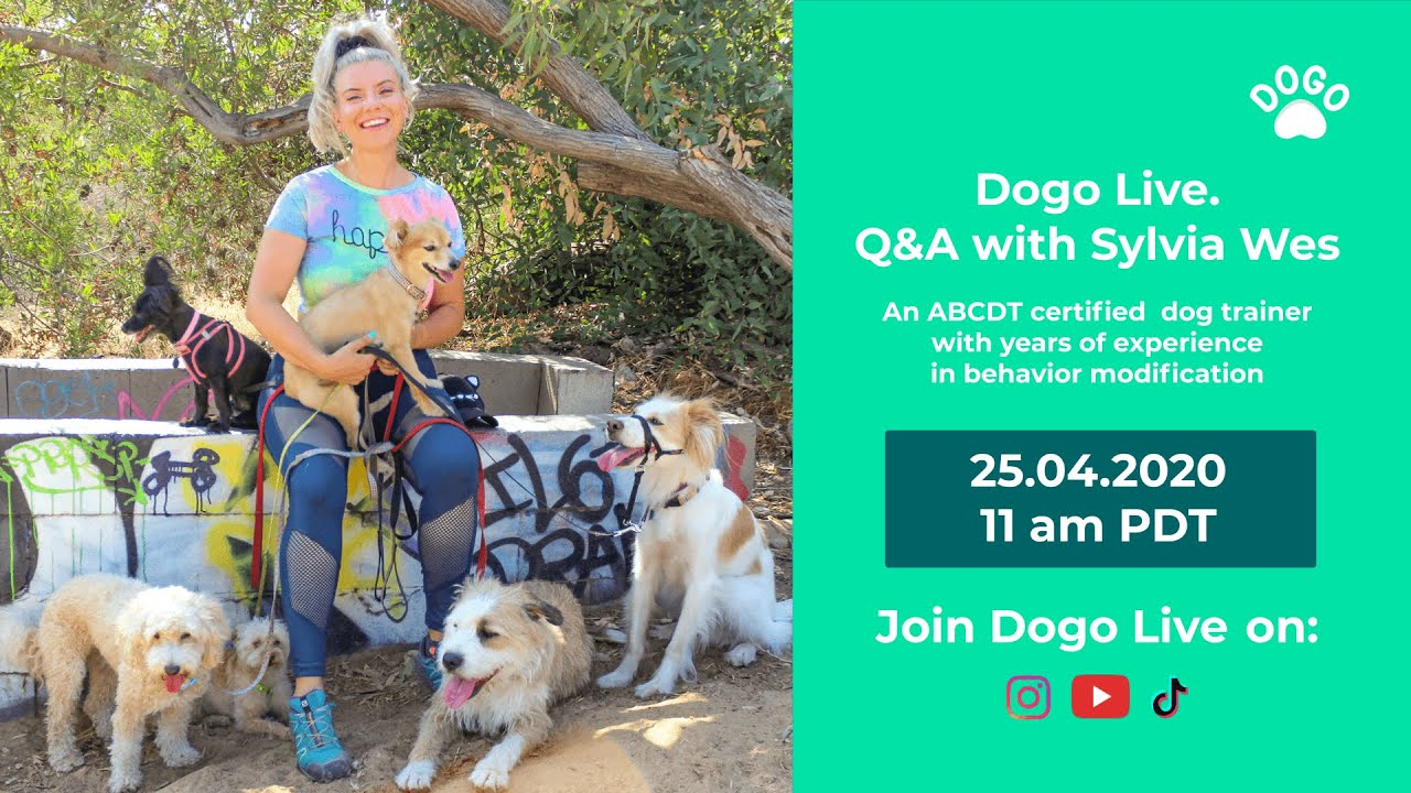 Q&A with dog trainer, Sylvia Wes