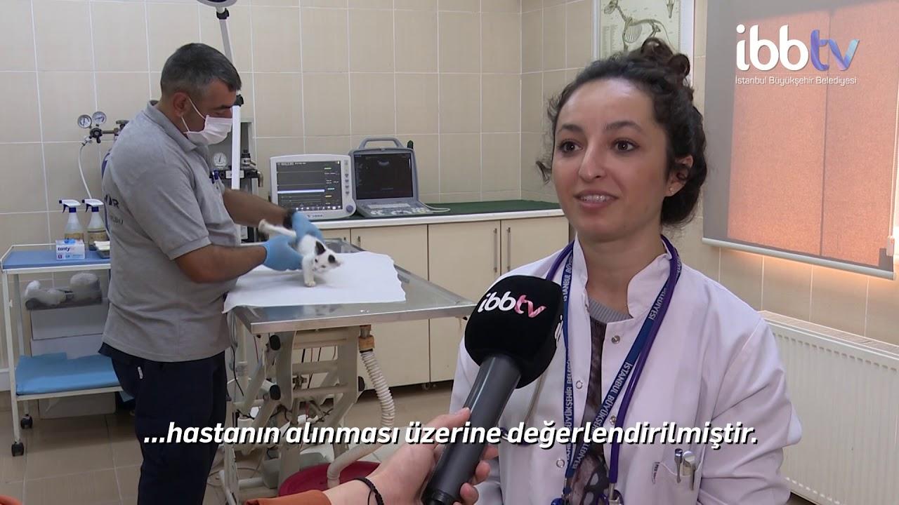 İstanbul'daki yaralı ve hasta hayvanlar emin ellerde