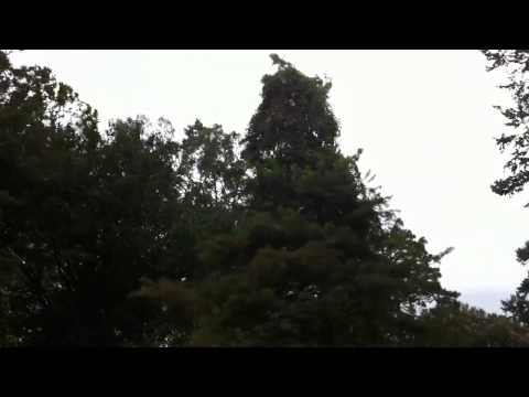Hurricane Isaac 7:30am - Back Yard View