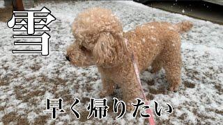 2018.12.29 【今日のいちご】 朝起きたら雪が降っていた。 散歩にいくま...