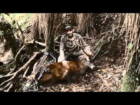 Te Ureweras roar hunt with bow and rifle. Red deer hunting New Zealand.