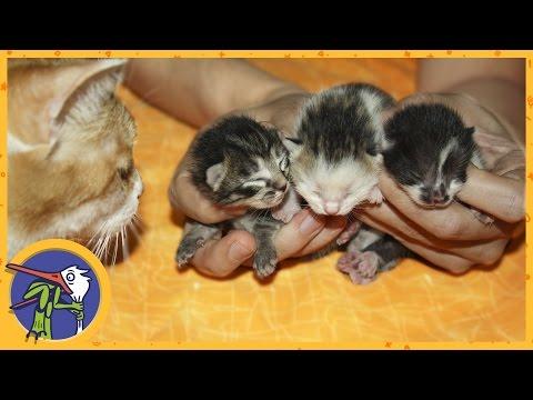 Кошка Китти родила котят. Поиски и спасение потерявшихся котят