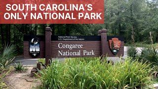 Hiking At Congaree Natİonal Park and Camping In Santee State Park   Camping in South Carolina