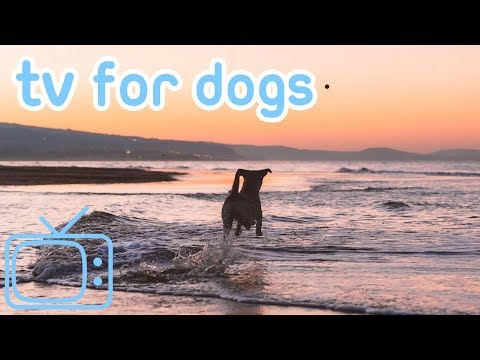 DOG TV! How to Calm My Dog from Anxiety and Stress with TV and Music!