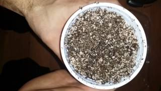 How to Grow Part 1, Seed Germination