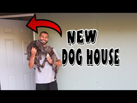 NEW DOG ROOM AND BULLY PUPPY UPDATES!!