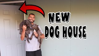 new-dog-room-and-bully-puppy-updates