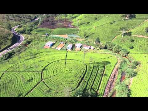 Tea Plantation  Sri Lanka film form the Air
