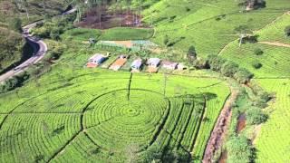 Tea Plantation  Sri Lanka film form the Air