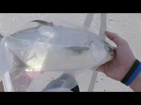 BEAST POMPANO!!! Beach fishing in Florida