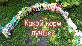 Каким кормом лучше кормить животных?