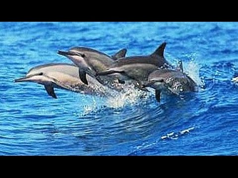 Amazing Dolphin Watching Safari Gibraltar Tourism Travel Vid