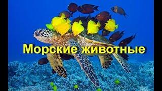 Морские животные. Учим название морских животных. Learn sea animals in Russian