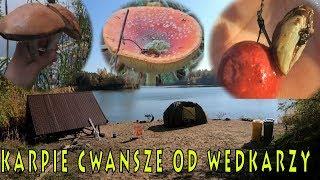 Zabójcze racicznice - grzybów więcej niż ryb - karpie cwańsze od wędkarzy
