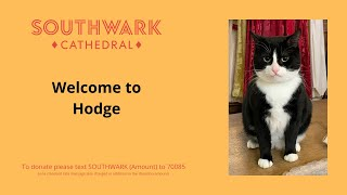 Welcome to Hodge - the new Southwark Cathedral cat