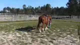 Sweet Pea 2 - Quarter Horse Mare