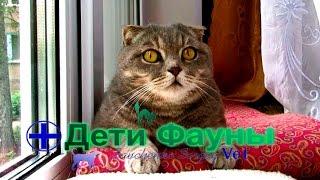 Кот на окне. Полезное и интересное видео от подписчиков