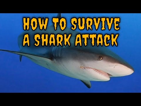 The Best Tips for Surviving a Shark Attack