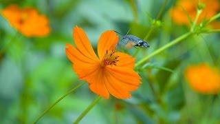 насекомые бабочки животные птицы