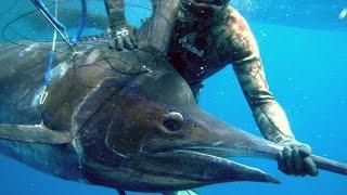 Chasse sous-marine extrême d'un Black Marlin - 250 kg de puissance pure dans le Deep Ocean Apnée