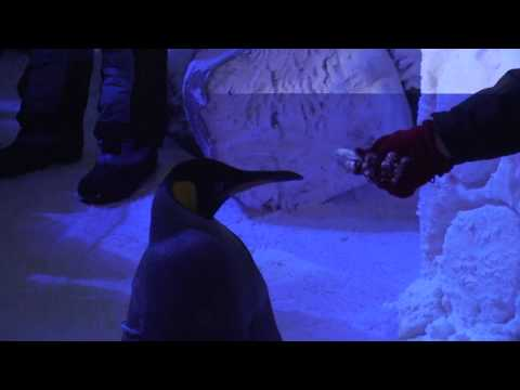 Ski Dubai – Penguins don't like fish?