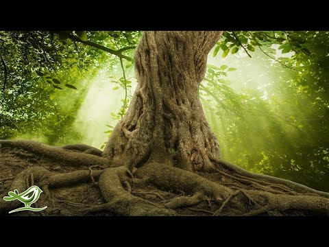 Relaxing Celtic Music: Peaceful, Soothing, Calming Harp Music | Beautiful Nature ★88