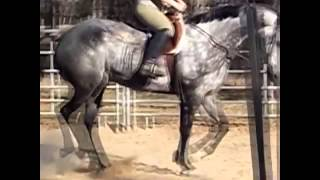 AQHA Show Horse - Dappled Gray