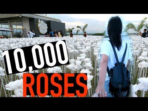 TRAVELING TO SEE 10,000 ROSES | MACTAN CEBU