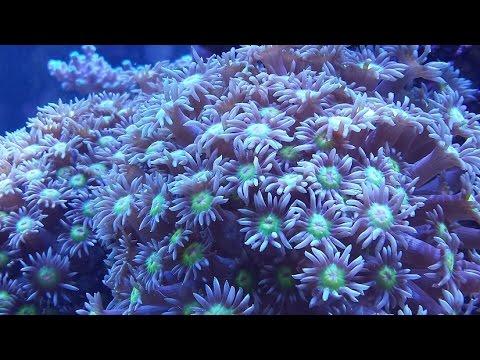4ft Reef Tank Update (10 months old) - 18 Jan 2015