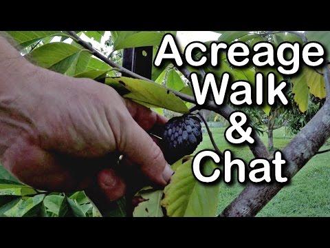 Acreage Living, Food Garden, Duck Pond, Birds Singing, Self Sufficient Homestead VLOG 4k