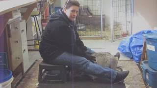Max the Canada Lynx learns more