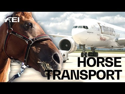 How the horses travel to the FEI World Equestrian Games™  Tryon 2018