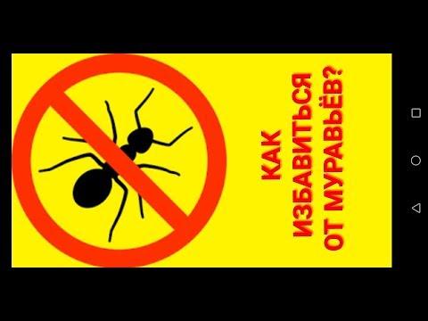 Как избавиться от домашних маленьких муравьёв?