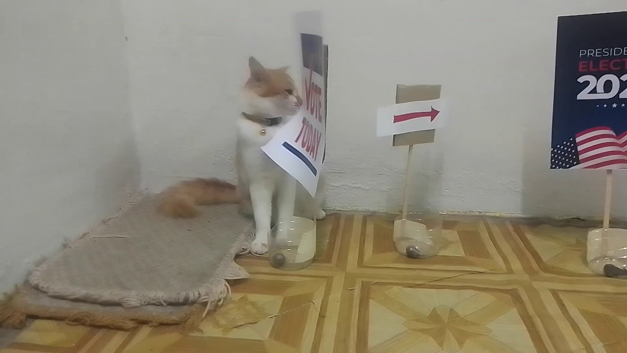 Let the Cat Decides, US Presidential Election 2020(Prophecy 2021)-Rehearsal Part 1