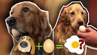 EGG CHALLENGE DOG