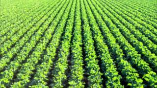PLANT NUTRIENTS URDU DR.ASHRAF SAHIBZADA .wmv