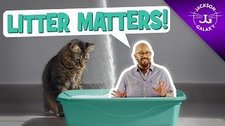 Litter Box Issues: Why Litter Matters
