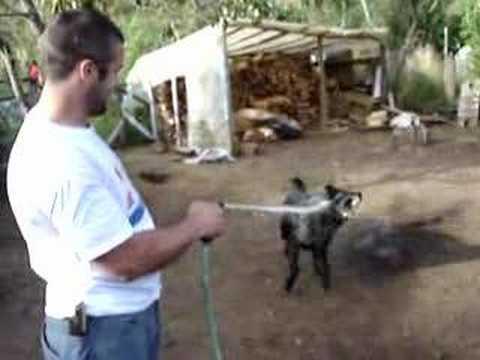 Stupid dog tricks