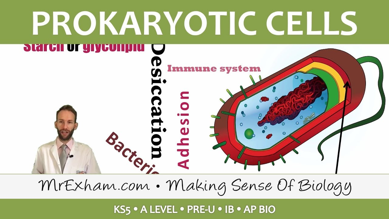 Prokaryotic Cells Introduction And Structure Post 16 Biology A Level Pre U Ib Ap Bio