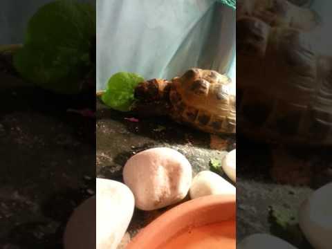 Tsathoggua eats a Dandelion flower
