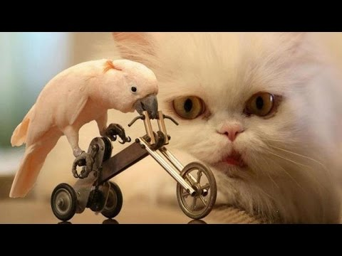 Animals & pets: Attempt to not grin or snigger problem   Humorous animal compilation