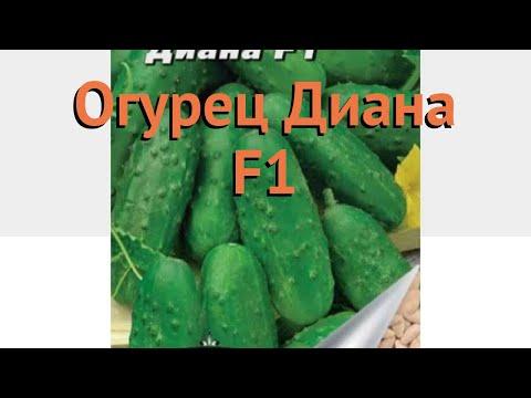 Огурец обыкновенный Диана F1 (diana f1) 🌿 огурец Диана F1 обзор: как сажать семена огурца Диана F1