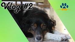 ❌💰Finanzierung der ATN-Hundetrainer-Ausbildung,🐶  ❌ ErfolgsTagebuch / Vlog # 2